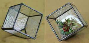 立方体のテラリウム